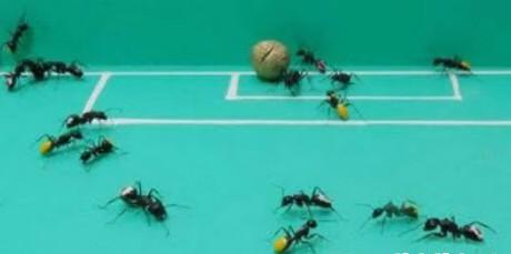 Mieren voetbal