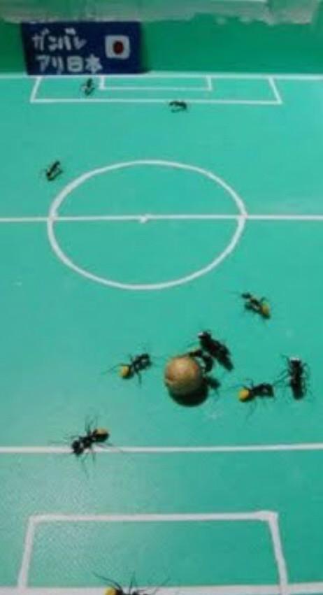 mierenvoetbal