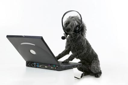 De hond van Piet Velthuizen