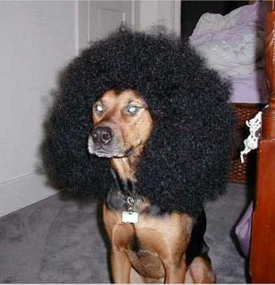 Marouane Fellaini lookalike